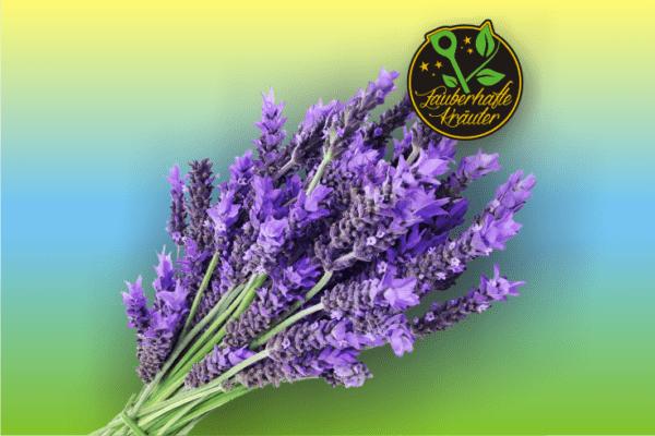 Zauber aus dem Süden: Lavendel